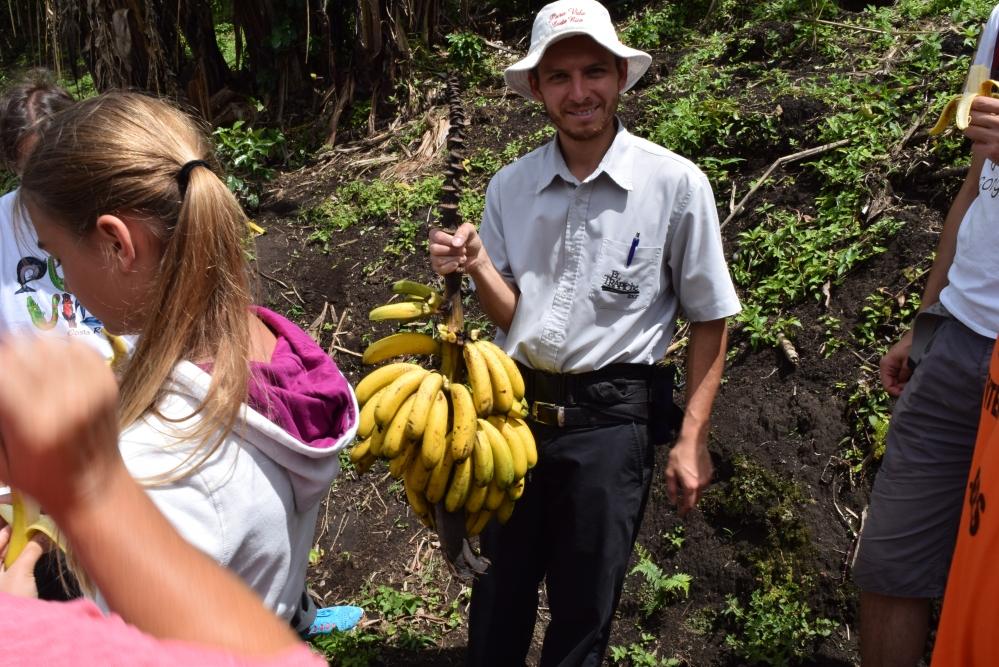 zdjęcie bananów na gałęzi